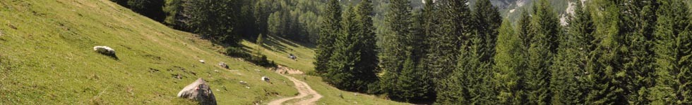 Walking trail: Uskovnica-Konjscica Alpine meadow
