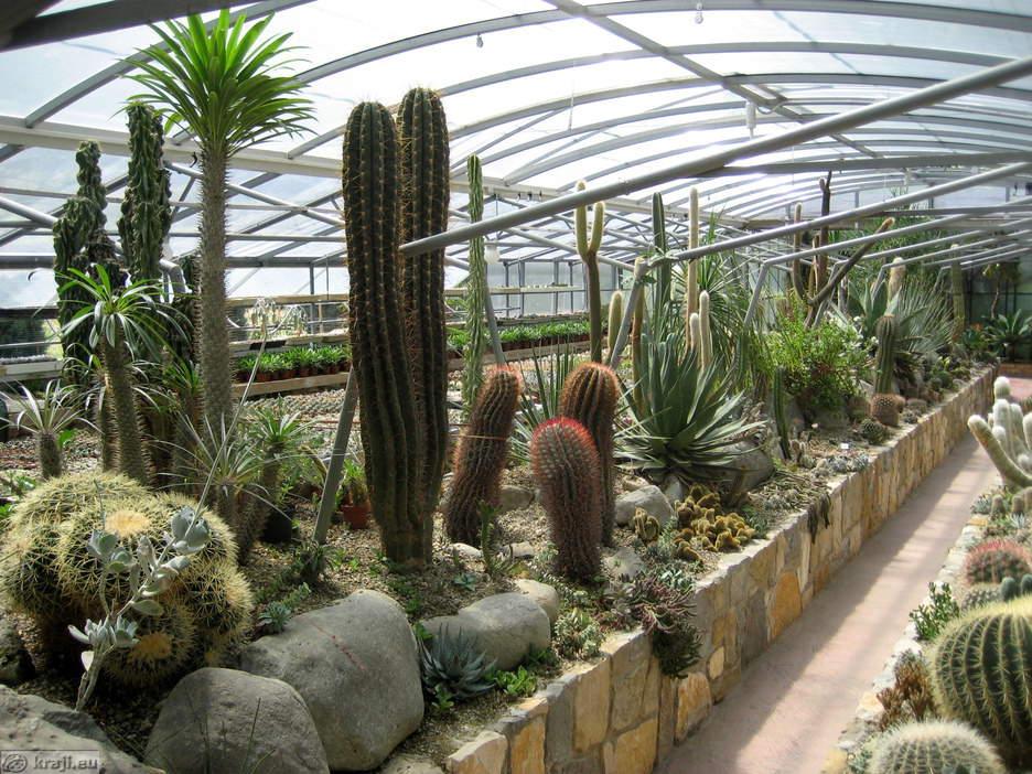 Garden Of Cacti   Garden Of Cacti Near Saltpans In Secovlje