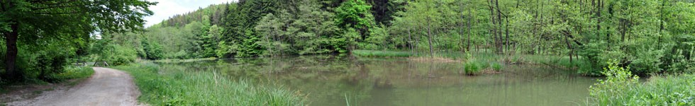 Ponds in the Valley of Draga - Last Pond
