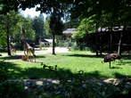 Ljubljana - Živalski vrt (Zoo)